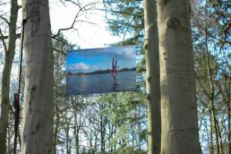 Innovatie en creativiteit met de natuur als inspiratie brom